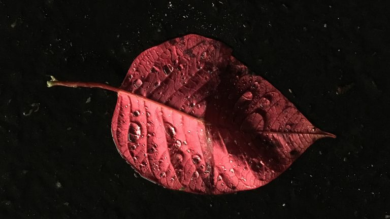 Red leaf in the rain, illuminated by a store light