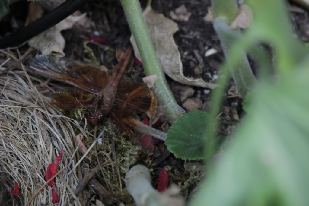 A photograph of a dragonfly next to an abandoned bird nest.